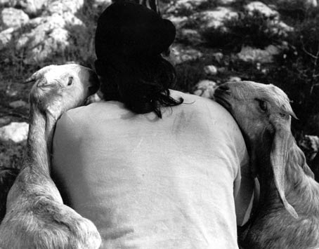 ari-with-goats.jpg